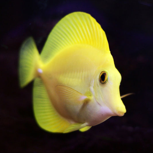 Корм для морских рыб