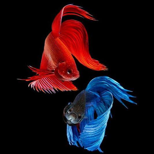 Корм для тропических рыб